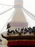 Nepal pigeon stupa Stock Image