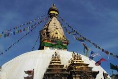 nepal stupawhite Arkivfoto