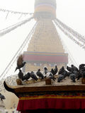 Nepal-Taube stupa Stockbild