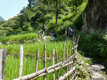 Nepal trekking. Rice fields near Ghermu - Marsyangdi river valley - Annapurna Circuit trek in Nepal royalty free stock photo