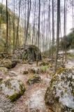 Nepal trekking w Langtang dolinie Fotografia Royalty Free