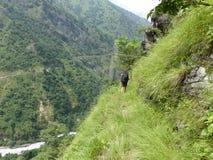 Nepal trekking. Way through Marsyangdi river valley - Annapurna Circuit trek royalty free stock photo