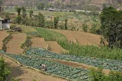 Nepal väg till den Chitwan nationalparken Royaltyfria Foton