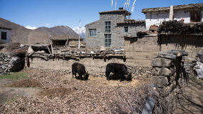 Nepal village Stock Image