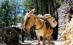 Nepal, way to Everest and donkey stock photography