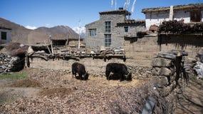 Nepal wioska Obraz Stock
