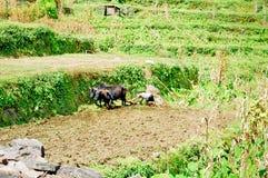 Nepal Worker stock image