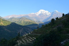 Nepales country. Terraced fields in front of mountains Stock Images