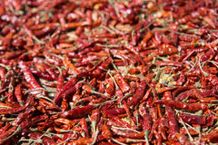 Nepalese chili drying in the sun Stock Images