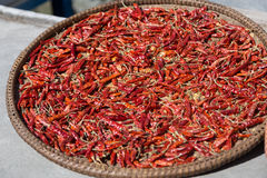 Nepalese chili on a plate drying in the sun Royalty Free Stock Images