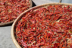Nepalese chili on plates drying in the sun Royalty Free Stock Photography