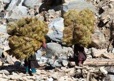 Nepalese con i fieni sul Nepal retro- Immagine Stock Libera da Diritti
