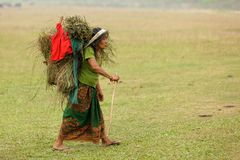 Nepalese farmer carrying animal Royalty Free Stock Images