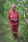 Nepalese farmer Stock Photo