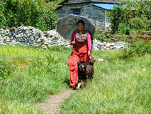 Nepalese girl with umbrella and dog in Tatopani, Nepal Royalty Free Stock Photography
