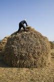 Nepalese man at work Royalty Free Stock Image