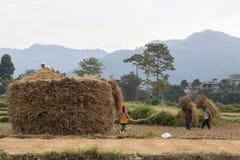 Nepalese peasants harvesting field in Pokhara, Nepal Stock Photos
