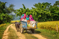 Nepalese people travelling on a wooden cart attached Royalty Free Stock Images