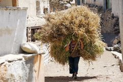 Nepalese woman carries a large haystack on her head, on the street in the village of Chami. Nepal. Stock Images