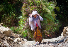 Nepalese woman carrying heavy load Stock Photos