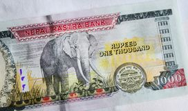 Nepalesische Banknoten 1000 Rupien Lizenzfreies Stockfoto