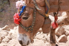 Nepalesischer Esel auf niedriges Lager-Wanderung Everest lizenzfreie stockbilder