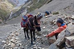 Nepalesisk portvakt med hästen på passera Royaltyfri Bild