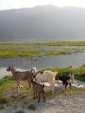 Nepalesiska getter fotografering för bildbyråer