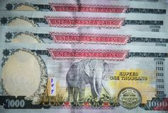 Nepalesiska sedlar 1000 rupier Royaltyfri Foto