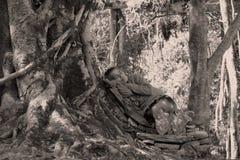 Nepali durmiente Fotos de archivo libres de regalías
