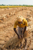 Nepali farmer at harvested field in Chitwan Nepal Stock Photos