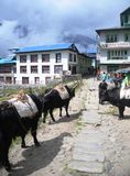 Nepali village Royalty Free Stock Photography