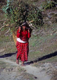 Nepali woman carrying forage back to her village Royalty Free Stock Photo