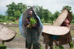 Chitwan Nepal July 23 2020 :Nepali woman working in the farmland from Chitwan Nepal