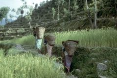 Nepali women porters Stock Images