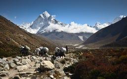 Nepali Yaks royalty free stock photos
