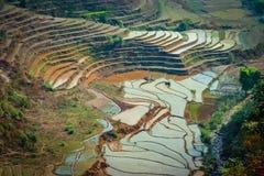 Nepaliricefields Arkivbilder