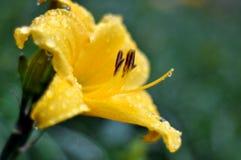 Nepenthes, Taglilien, Taglilie, ZhenHua Jin, Blumen, Blumen, Zierpflanzen, Fr?hling, st?dtisches Gr?nen, Blumen, Anlagen, natur stockfotografie