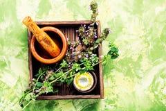 Nepeta, het helen kruiden en Herbalism royalty-vrije stock foto