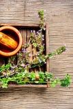 Nepeta, het helen kruiden en Herbalism royalty-vrije stock afbeelding