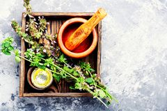 Nepeta, het helen kruiden en Herbalism stock fotografie