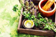 Nepeta, het helen kruiden en Herbalism royalty-vrije stock fotografie