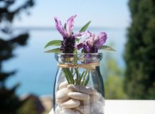 Nepetoideae plants, young lavender and sage in decorative jar. Lavandula angustifolia, young lavender and sage in decorative jar with blurred sea in the stock photo