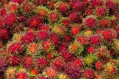 Nephelium lappaceum Linn. Or rambutan,the fruit of tropic Royalty Free Stock Photo