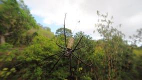 Nephila pilipes, μεγάλη αράχνη, Μπαλί, Ινδονησία απόθεμα βίντεο