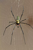 Nephila Pilipes Stock Photo