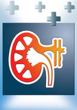 Nephrology Stock Images