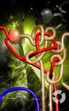 Nephron. Digital illustration of  nephron   in  colour background Stock Photo