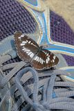 Butterfly on shoes. A Neptis rivularis stays on shoes Royalty Free Stock Photos