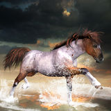 Neptune. A wild horse runs free in the surf Royalty Free Stock Image
